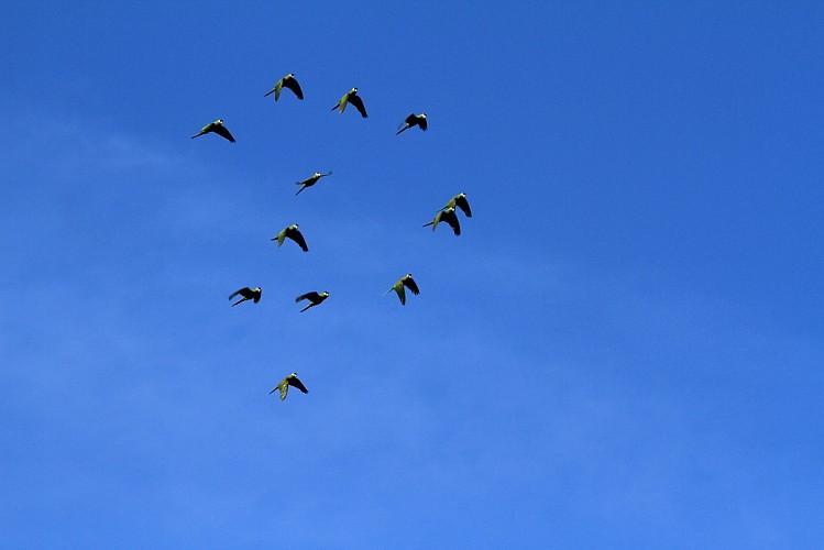 tatu birds.jpg